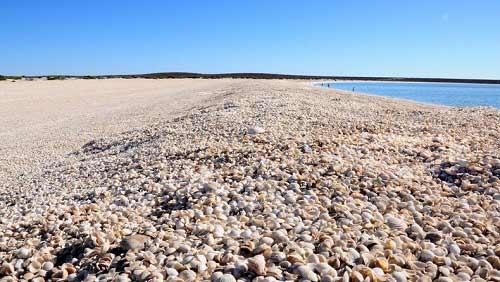 Những bãi biển vỏ sò tuyệt đẹp của thế giới - 5
