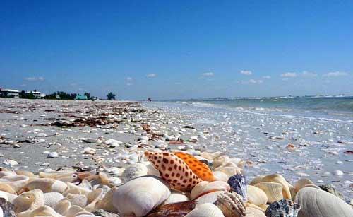 Những bãi biển vỏ sò tuyệt đẹp của thế giới - 6