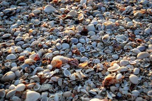 Những bãi biển vỏ sò tuyệt đẹp của thế giới - 7