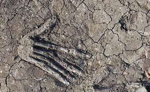 16 bàn tay bị chôn vùi ở Ai Cập - 3