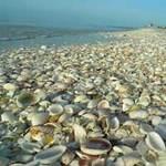 Du lịch - Những bãi biển vỏ sò tuyệt đẹp của thế giới