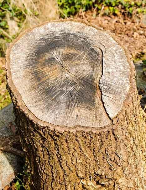 Chúa Giêsu hiện hình trên thân cây - 1