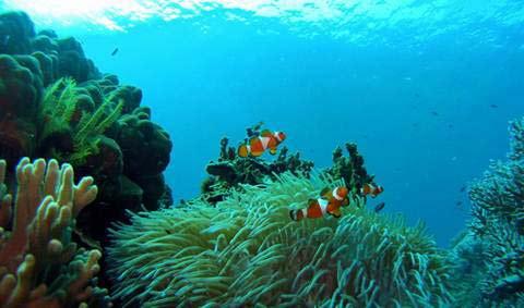 Thơ mộng Đảo Rồng Tioman (Malaysia) - 4