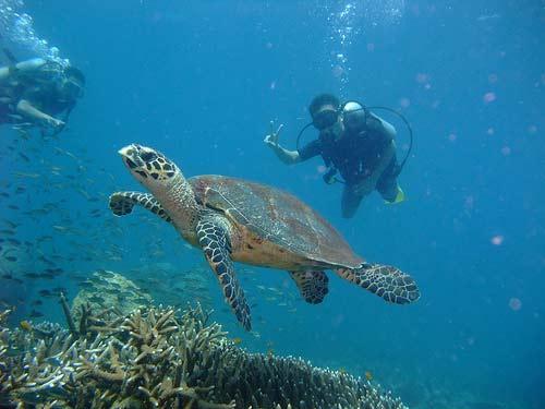Thơ mộng Đảo Rồng Tioman (Malaysia) - 5