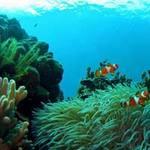 Du lịch - Thơ mộng Đảo Rồng Tioman (Malaysia)
