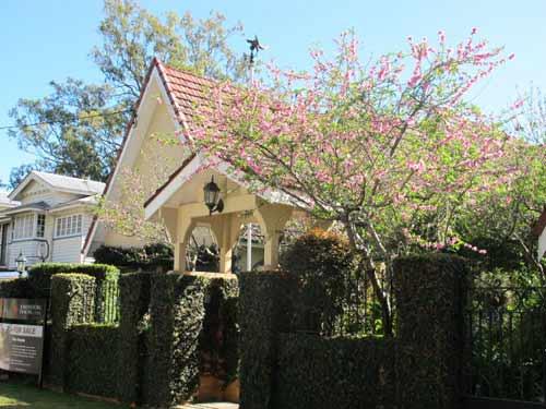 Hoa đào Việt nở rực rỡ trên đất Úc - 4