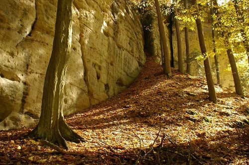 Thiên đường ẩn trong cánh rừng già ở CH Séc - 9