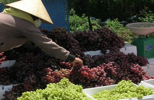 Siết chặt nhập khẩu nông sản Trung Quốc - 1
