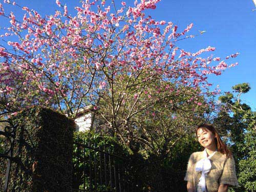 Hoa đào Việt nở rực rỡ trên đất Úc - 8