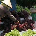 Thị trường - Tiêu dùng - Siết chặt nhập khẩu nông sản Trung Quốc