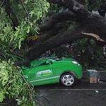 Tin tức trong ngày - Bão, cây to đè nát taxi gây chết người