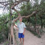 Phi thường - kỳ quặc - Cây ổi được trả 100 triệu đồng ở Hà Tĩnh