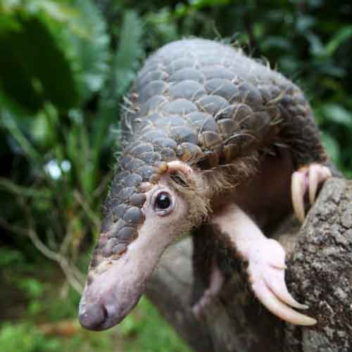 Những con thú có hình dáng quái dị nhất - 9