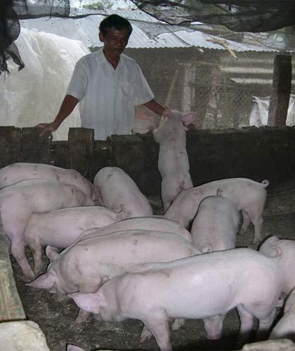 Giá thức ăn chăn nuôi bị thao túng ? - 1