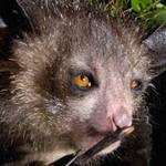 Phi thường - kỳ quặc - Những con thú có hình dáng quái dị nhất