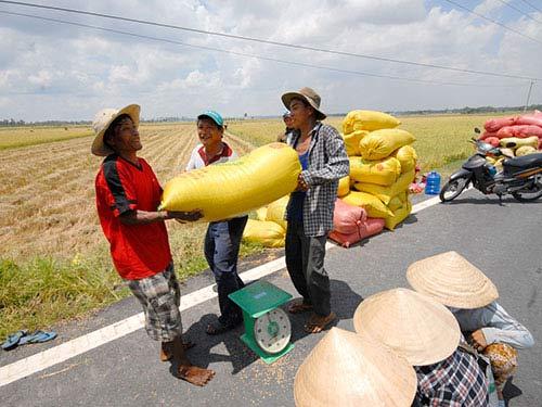 Giá lúa tăng, nông dân tiếc nuối - 1