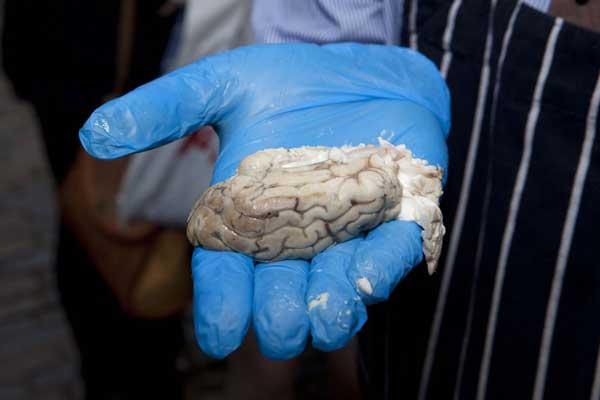 Kinh dị: Bánh mì kẹp não bê - 3