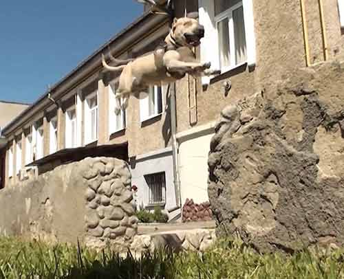 """Phát hiện chú chó """"siêu nhân"""" - 1"""