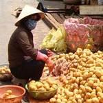 Thị trường - Tiêu dùng - Nhiều hàng Trung Quốc nhái hàng Đà Lạt