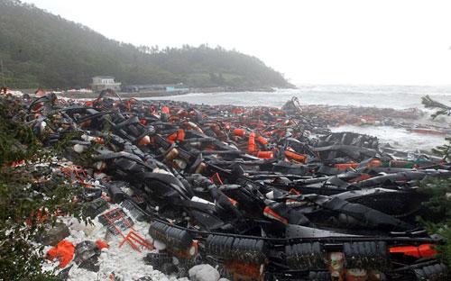 Chùm ảnh bão Bolaven tàn phá Hàn Quốc - 11