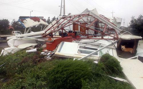 Chùm ảnh bão Bolaven tàn phá Hàn Quốc - 4