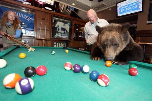 Sống với gấu như con trong nhà - 1