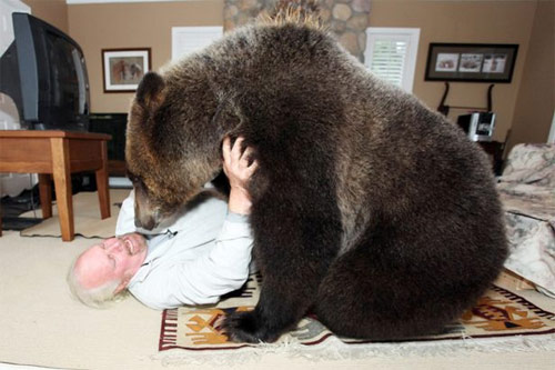 Sống với gấu như con trong nhà - 4
