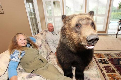 Sống với gấu như con trong nhà - 3