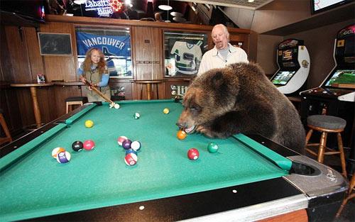 Sống với gấu như con trong nhà - 2