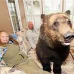 Phi thường - kỳ quặc - Sống với gấu như con trong nhà