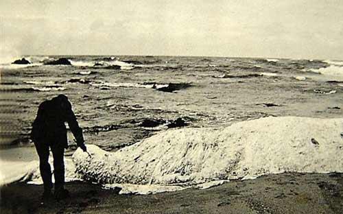 10 thủy quái nổi tiếng nhất mọi thời đại - 9