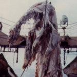 Phi thường - kỳ quặc - 10 thủy quái nổi tiếng nhất mọi thời đại
