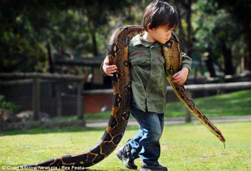 Cậu bé 2 tuổi chơi với trăn và cá sấu - 2