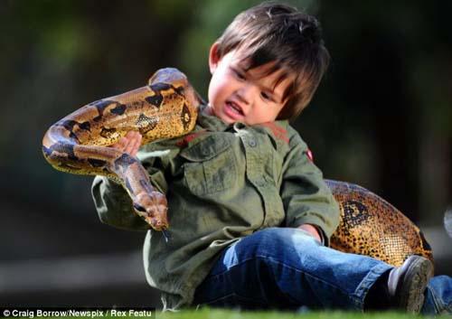 Cậu bé 2 tuổi chơi với trăn và cá sấu - 6