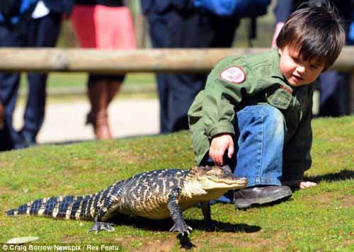 Cậu bé 2 tuổi chơi với trăn và cá sấu - 7