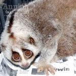 """Tin tức trong ngày - """"Giải cứu"""" 3 cá thể động vật quý hiếm"""