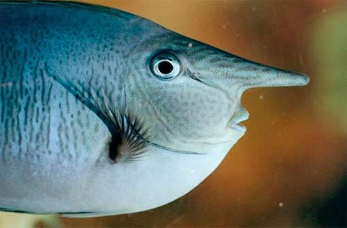 Phát hiện loài cá mặt giống hệt người - 1