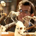 Phi thường - kỳ quặc - Kỳ quặc bảo tàng động vật học
