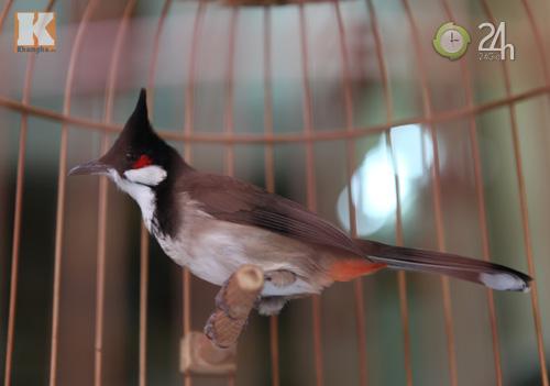 Ngắm những chú chim giá trăm triệu - 11