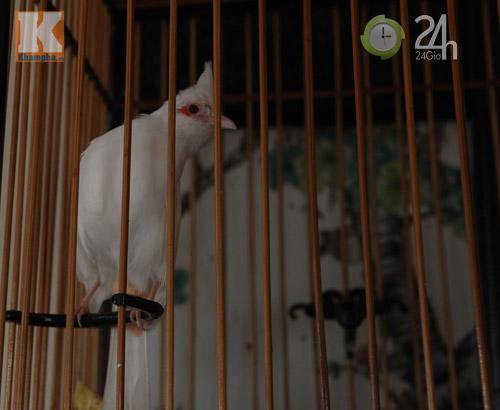 Ngắm những chú chim giá trăm triệu - 3