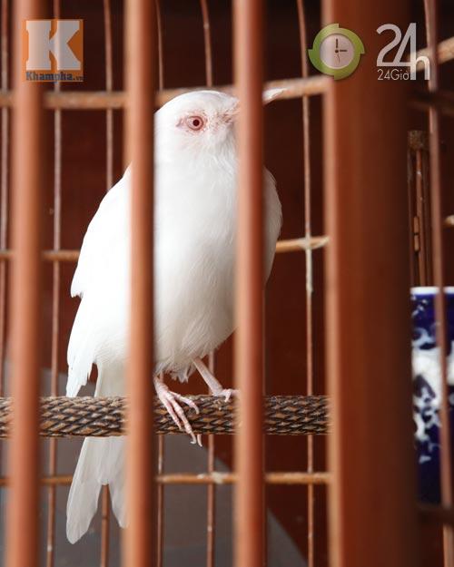 Ngắm những chú chim giá trăm triệu - 5