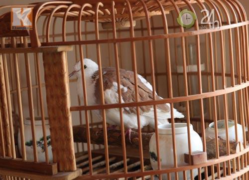 Ngắm những chú chim giá trăm triệu - 6