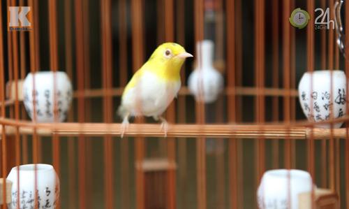 Ngắm những chú chim giá trăm triệu - 7