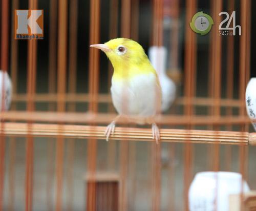 Ngắm những chú chim giá trăm triệu - 8