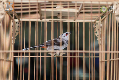 Ngắm những chú chim giá trăm triệu - 9