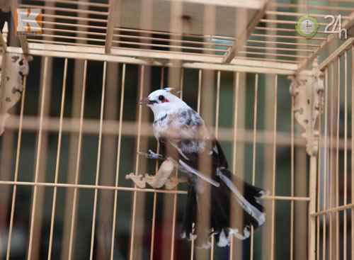 Ngắm những chú chim giá trăm triệu - 10
