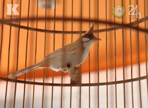 Ngắm những chú chim giá trăm triệu - 1