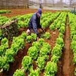 Thị trường - Tiêu dùng - Triệt tiêu thực phẩm bẩn