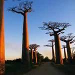 Du lịch - Ngoạn mục thiên đường động vật Madagascar