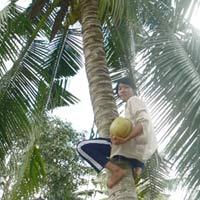 Cô gái leo dừa mướn đậu hai trường ĐH